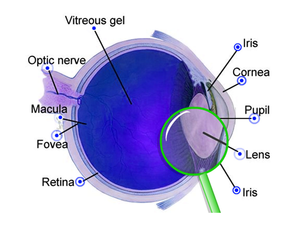 Blank Diagram Of The Eye